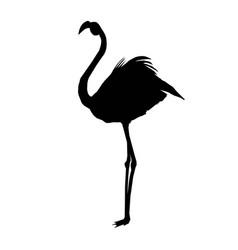 pink african beak beauty leg wildlife beach vector image