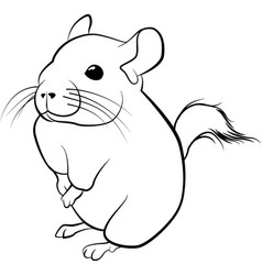 cute chinchilla line art black line vector image vector image