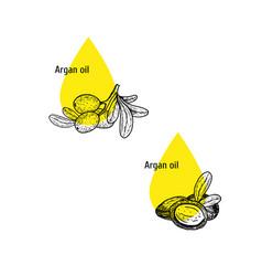 Argan oil icon set hand drawn sketch extract vector