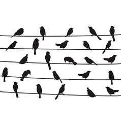 birds on wires vector image