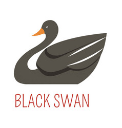 Black swan cartoon bird from australia vector