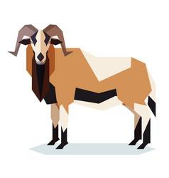 flat geometric american black bellied sheep vector image