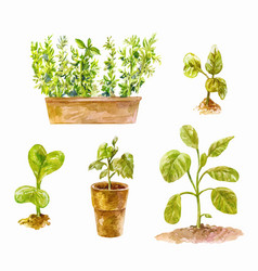 Several pots with seedlings for growing tomatoes vector