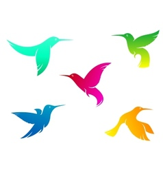 Flying color hummingbirds vector image vector image