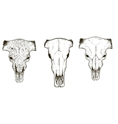 Drawing animal skulls set vector image vector image