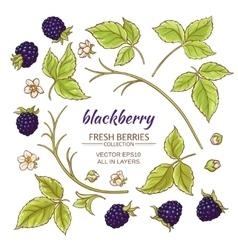 Blackberry elements set vector