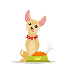 Chihuahua dog preparing for food vector