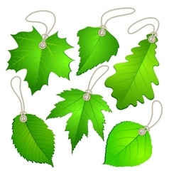 Hanging tags with green leaves vector
