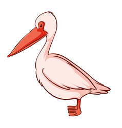 Pink pelican on white background vector