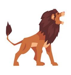 Roaring powerful lion mammal jungle animal vector