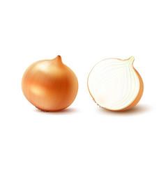 Set whole and sliced yellow onion bulbs vector