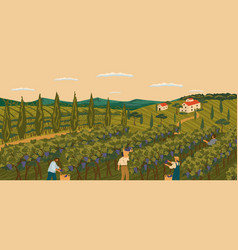 Vineyard landscape with grape tree field and vector
