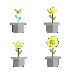 flower plant growth in a pot vector image