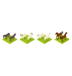 Isometric hoofed cattle dunkey horse ram vector