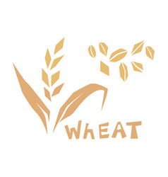 cereal grains wheat or vector image