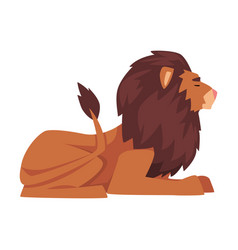Lying lion proud powerful mammal jungle animal vector