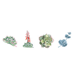 succulent hand drawn beautiful collection set vector image
