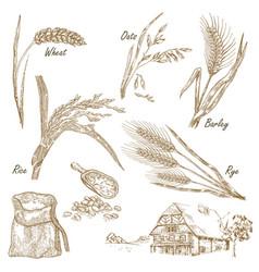 Wheat rye oats barley farm house in vintage vector