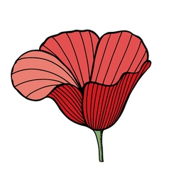 Flower of red poppy vector image