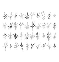 hand drawn botanical decorative design elements vector image vector image