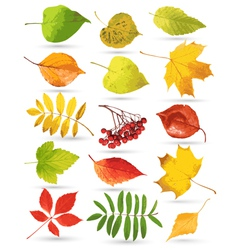 set of colorful leaves vector image vector image