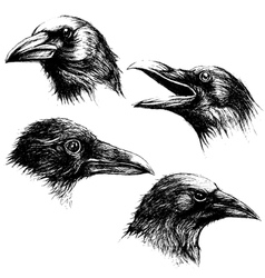 Crow head drawing line work set 02 vector