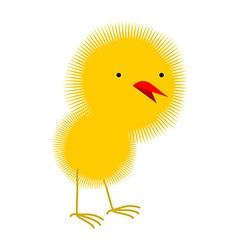 Fluffy yellow chick chicken Little Chick on a vector image