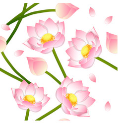 pink indian lotus on white background vector image