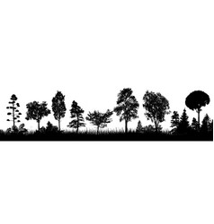 trees silhouette on white background vector image