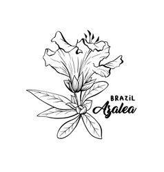 azalea ericaceae flowers ink pen sketch vector image