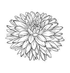 Beautiful monochrome black and white dahlia vector