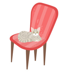 Cat sitting on chair kitty kitten pet on armchair vector