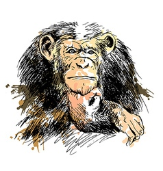 Colored Hand drawing Chimpanzee vector