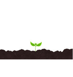 One young plant shoot seedling germination vector