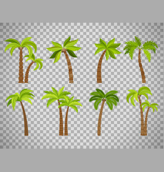 Palm trees set on transparent background vector
