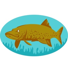 Pike or muskie fish swimming vector image