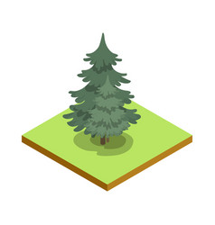 pine tree isometric 3d icon vector image