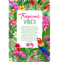 tropical leaves flowers and parrot vector image