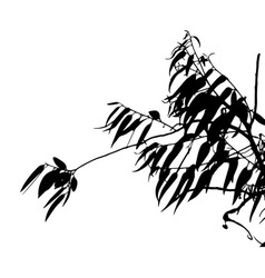 Eucalyptus tree silhouette vector
