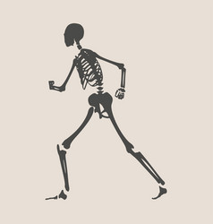 Halloween human skeleton vector