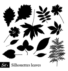 Set of Leaf Silhouettes Isolated on white vector
