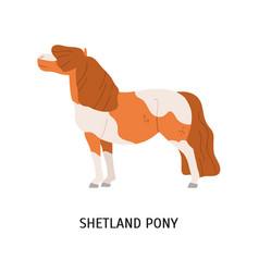 Shetland pony flat small vector