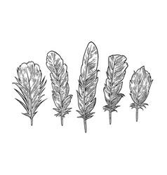 set feathers vintage black engraving vector image