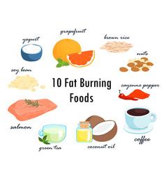 Top ten fat burning fat foods vector