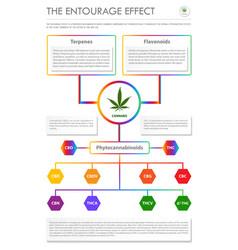 Entourage effect vertical business vector
