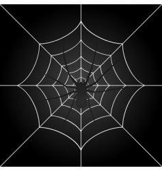 spider vector image