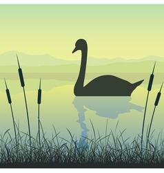 swan on water vector image vector image