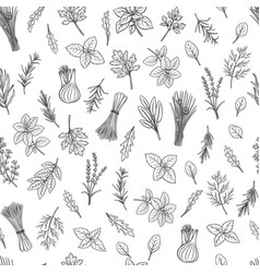 Herbs and spice seamless pattern vector