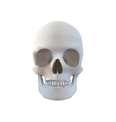 realistic skull - isolated on white vector image