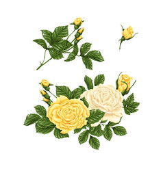 Set of yellow and white roses bouquets flowers vector